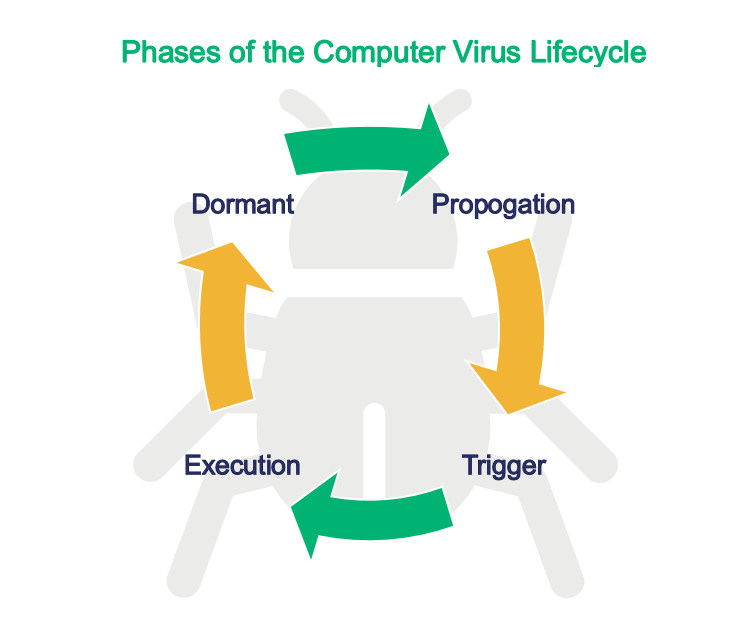 Types of malware graphic - an illustration of the phases of a computer virus life cycle