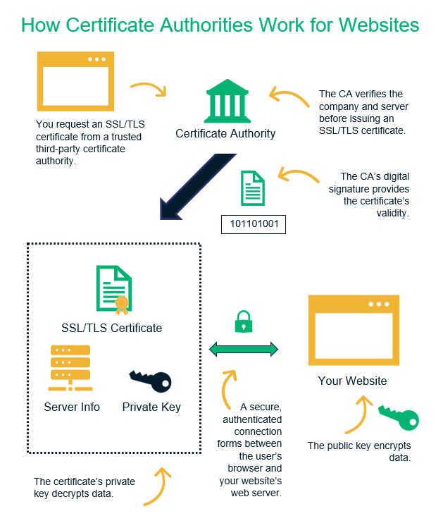An illustration that breaks down the role of a certificate authority in issuing a website security certificate