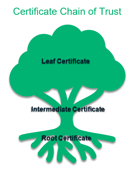 An illustration of a tree representing the chain of trust in SSL/TLS